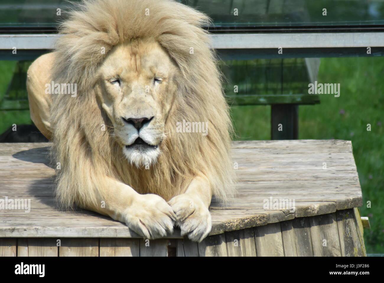 Royal King - Stock Image