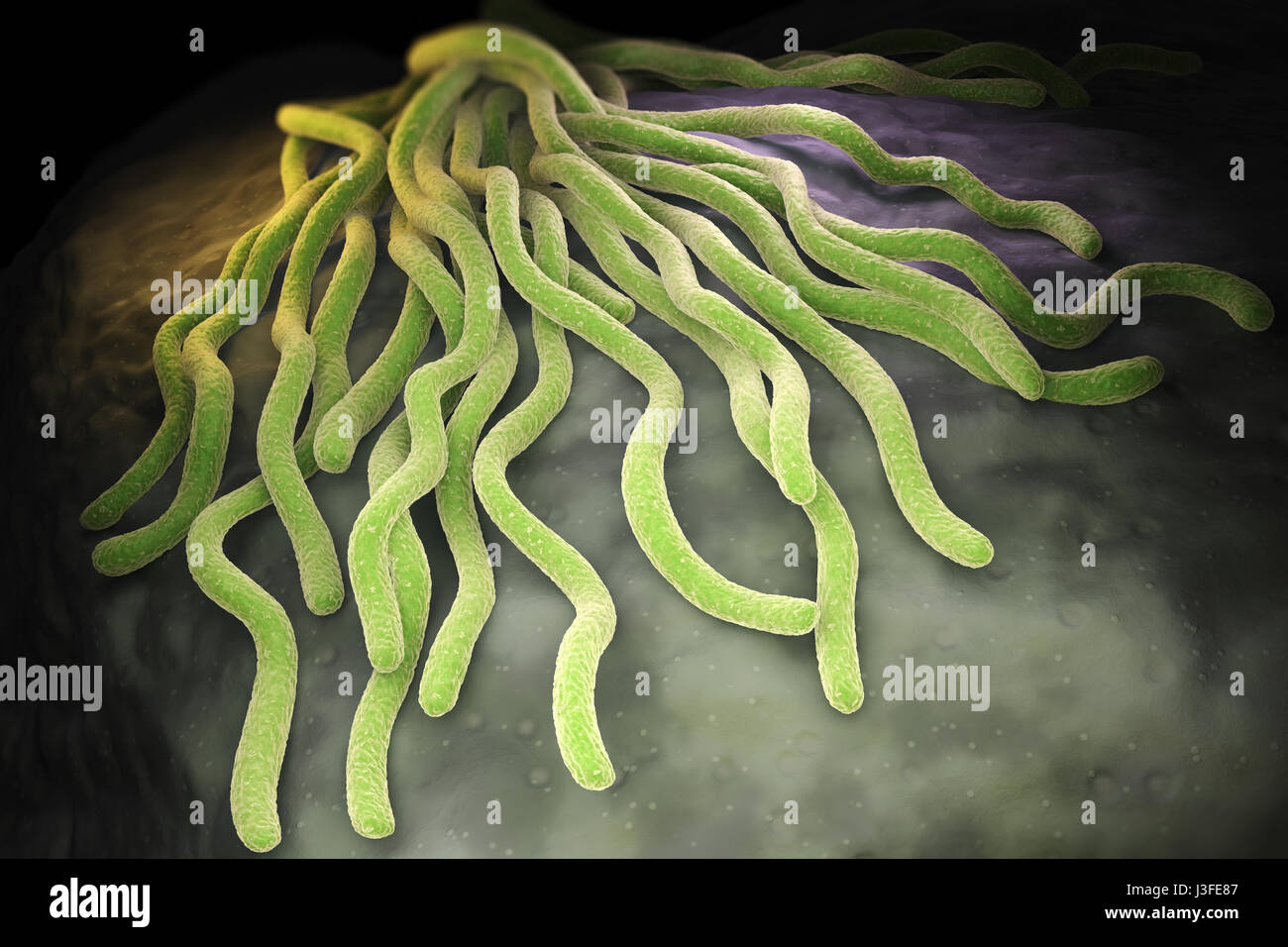 Colony of Borrelia burgdorferi bacteria, the bacterial agent of Lyme disease transmitted by ticks. 3D illustration - Stock Image