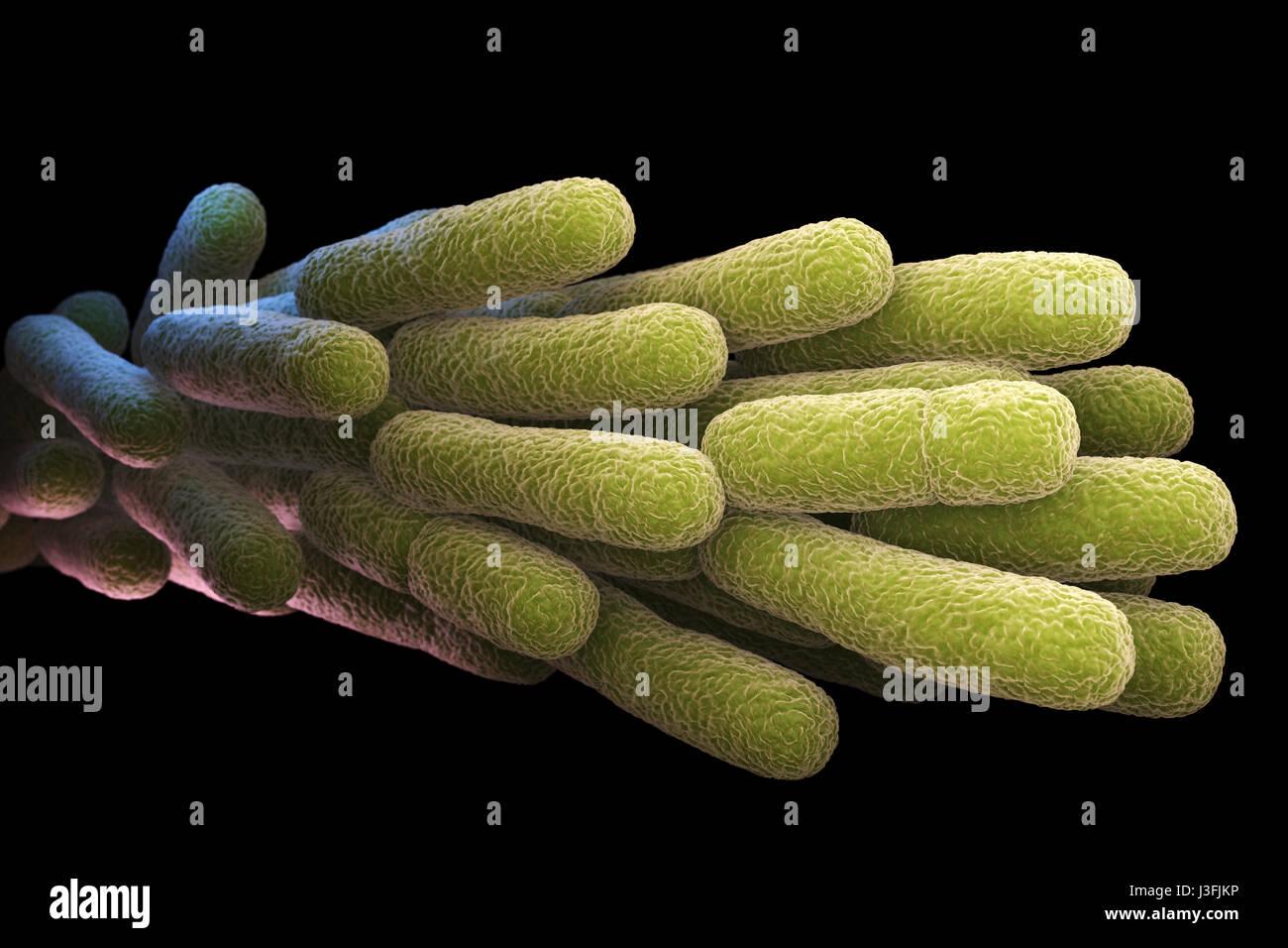 Legionella Pneumophila Bacteria. 3D illustration - Stock Image