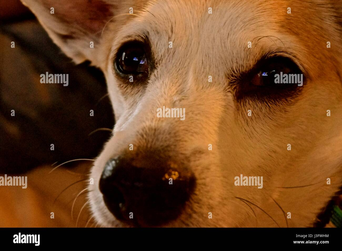 Doggies, pets, man's best friend are our most loyal companions. - Stock Image
