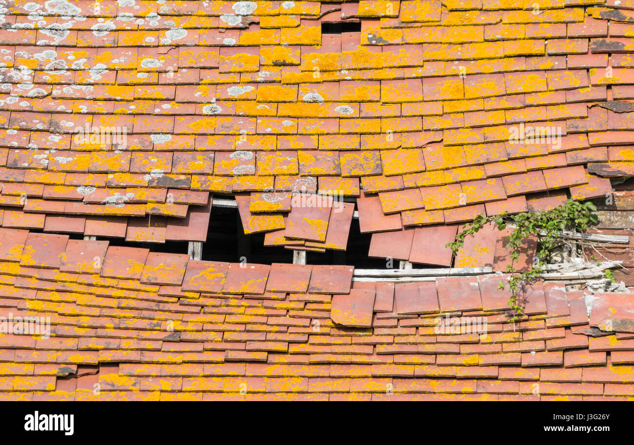 Neglected old tiled roof on a shed in need of repair. - Stock Image