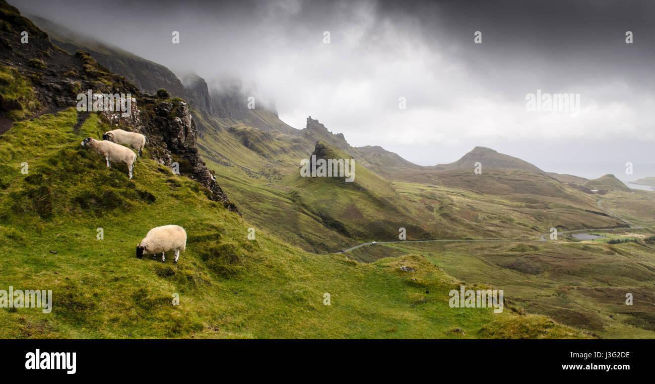 A family of sheep graze on the mountainside in the fairytale landscape of the Quiraing, shaped by landslips, in - Stock Image