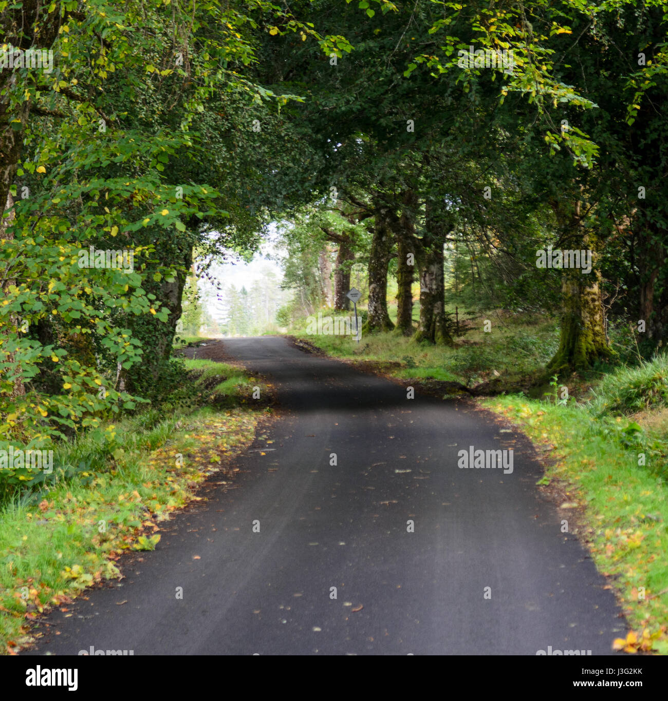 A narrow country lane runs through plantation forests at Strathellen Wood above Plockton in the west Highlands of - Stock Image