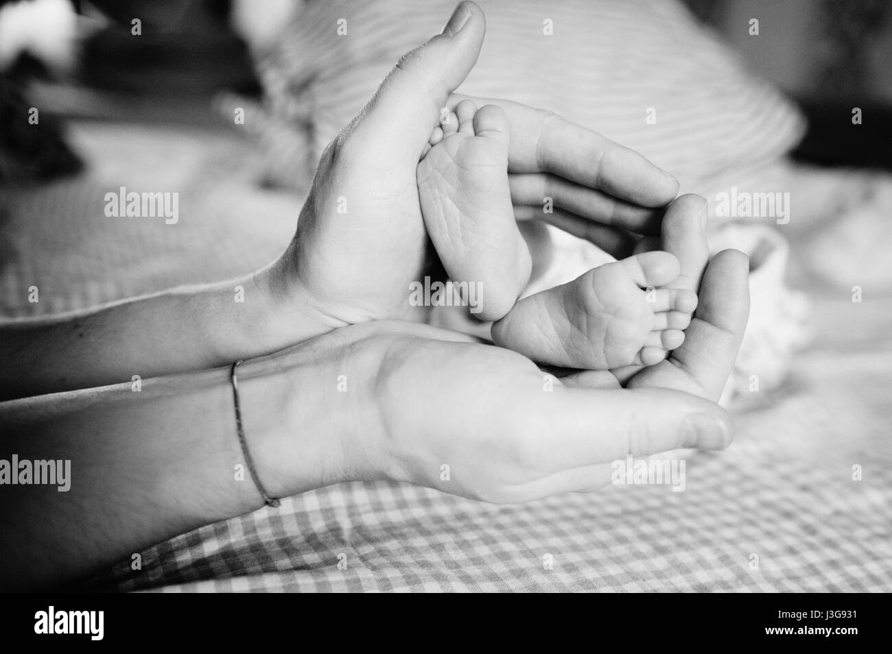 Baby little pink feet in parent hands - Stock Image