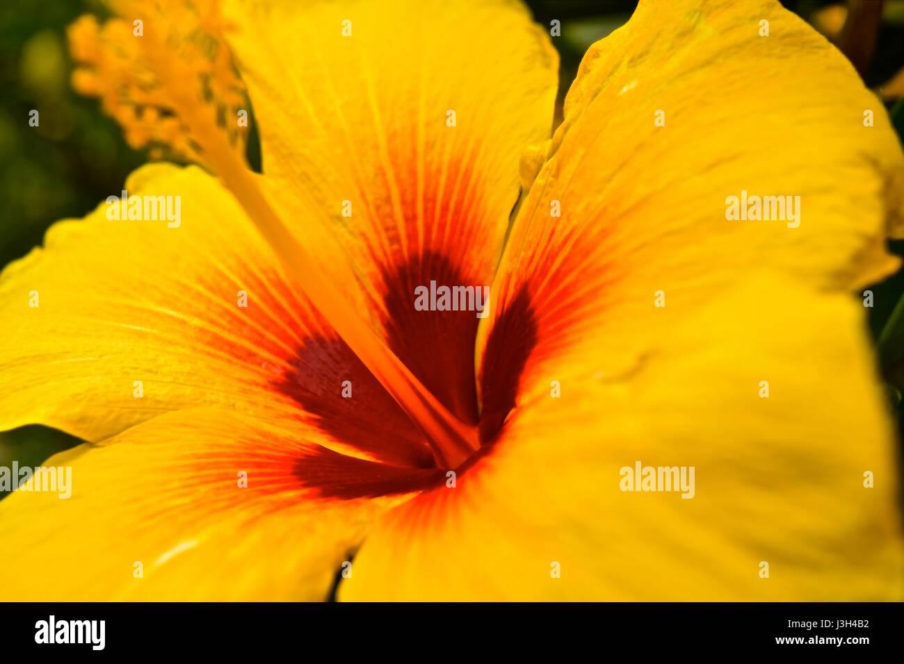 Flower Behind Ear Stock Photos Flower Behind Ear Stock Images Alamy