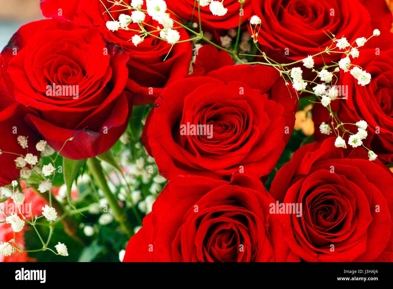Bouquet Of Red Roses And Small White Flowers Close Up Stock Photo