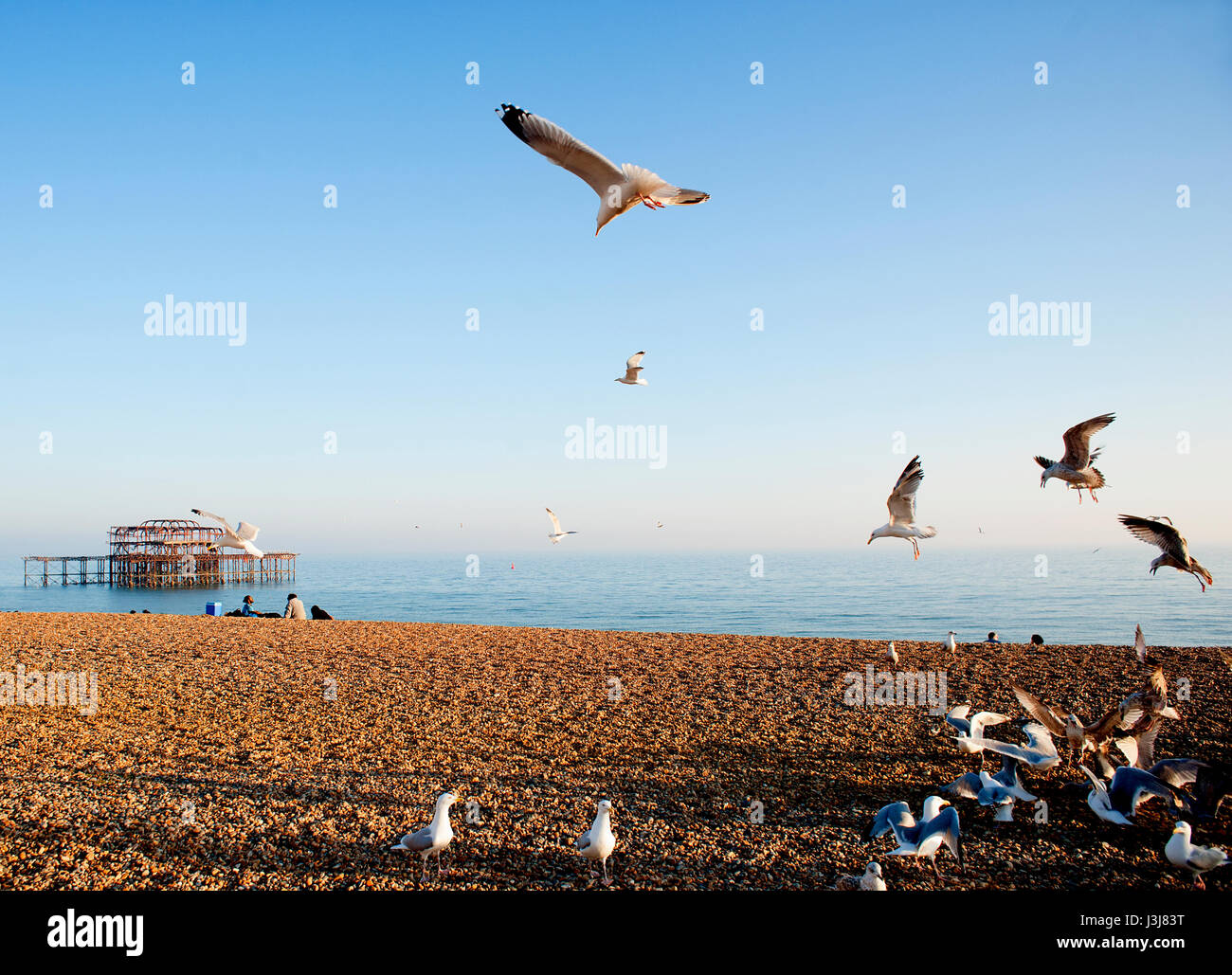 A flock of seagulls flies over Brighton beach on the south coast of England with the ruins of the famous West Pier - Stock Image