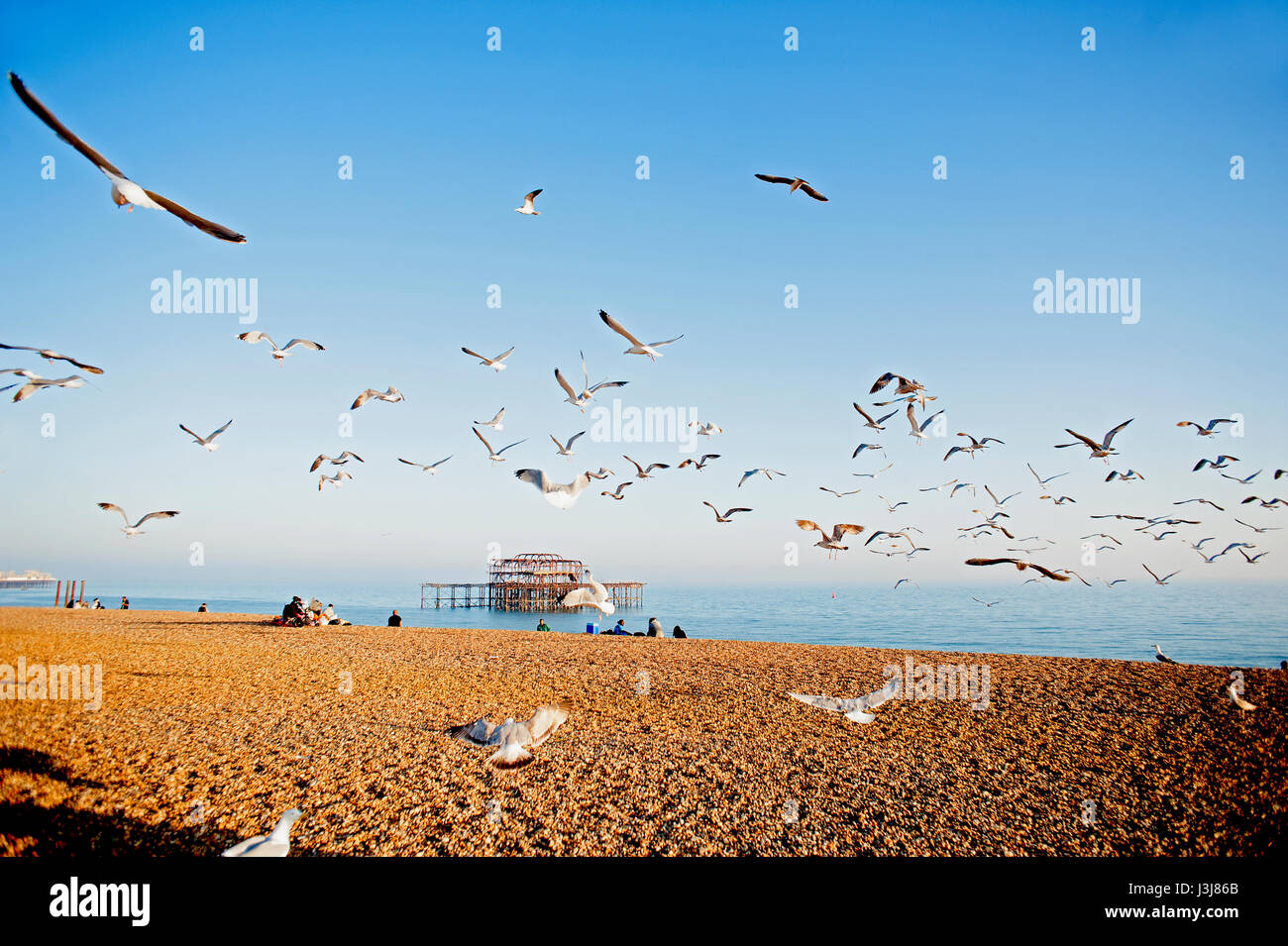 A flock of seagulls flies over Brighton beach on the south coast of England with the ruins of the famous West Pier Stock Photo