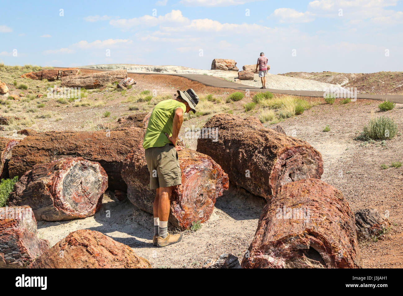 Sections of logs of the Petrified Forest Lying about in Arizona - Stock Image