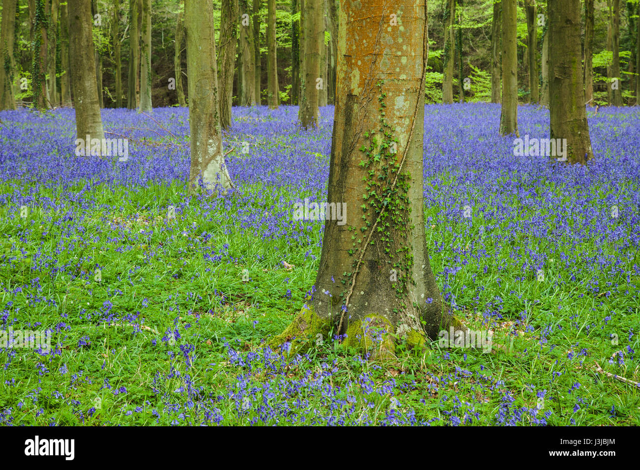 Angmering Stock Photos & Angmering Stock Images - Alamy