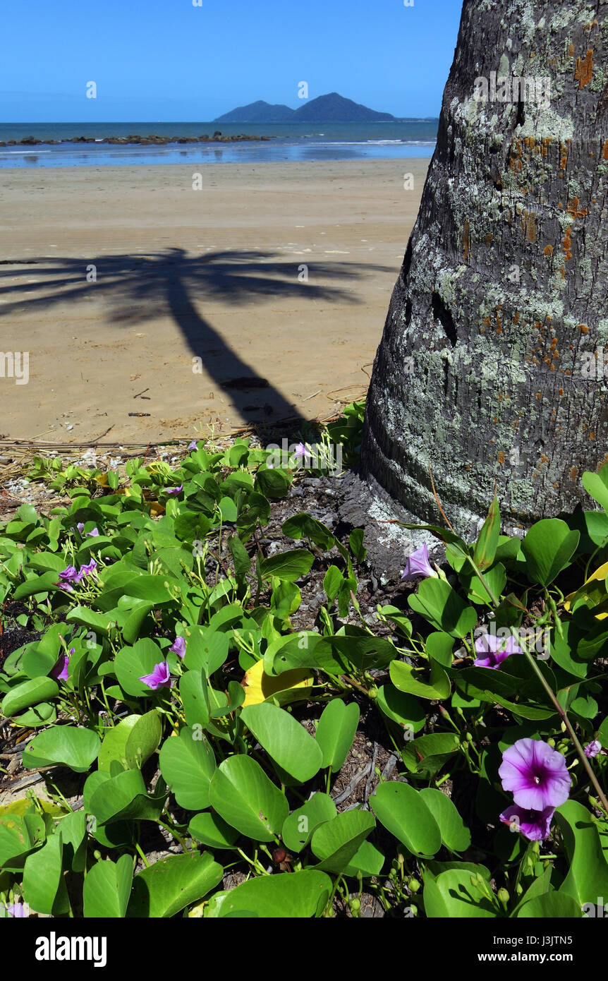 Mission Beach with Dunk Island in background, Queensland, Australia - Stock Image