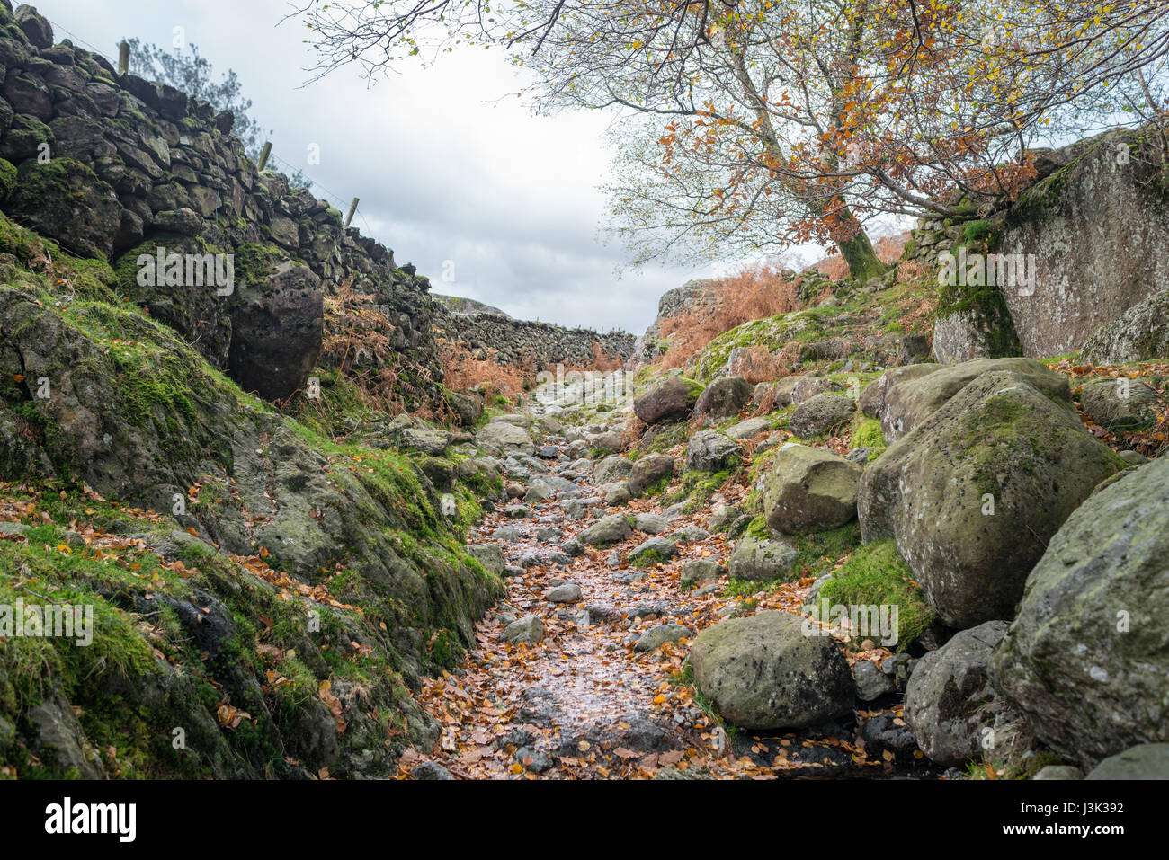 A rocky footpath running down beside Grasmere in the Lake District, England - Stock Image