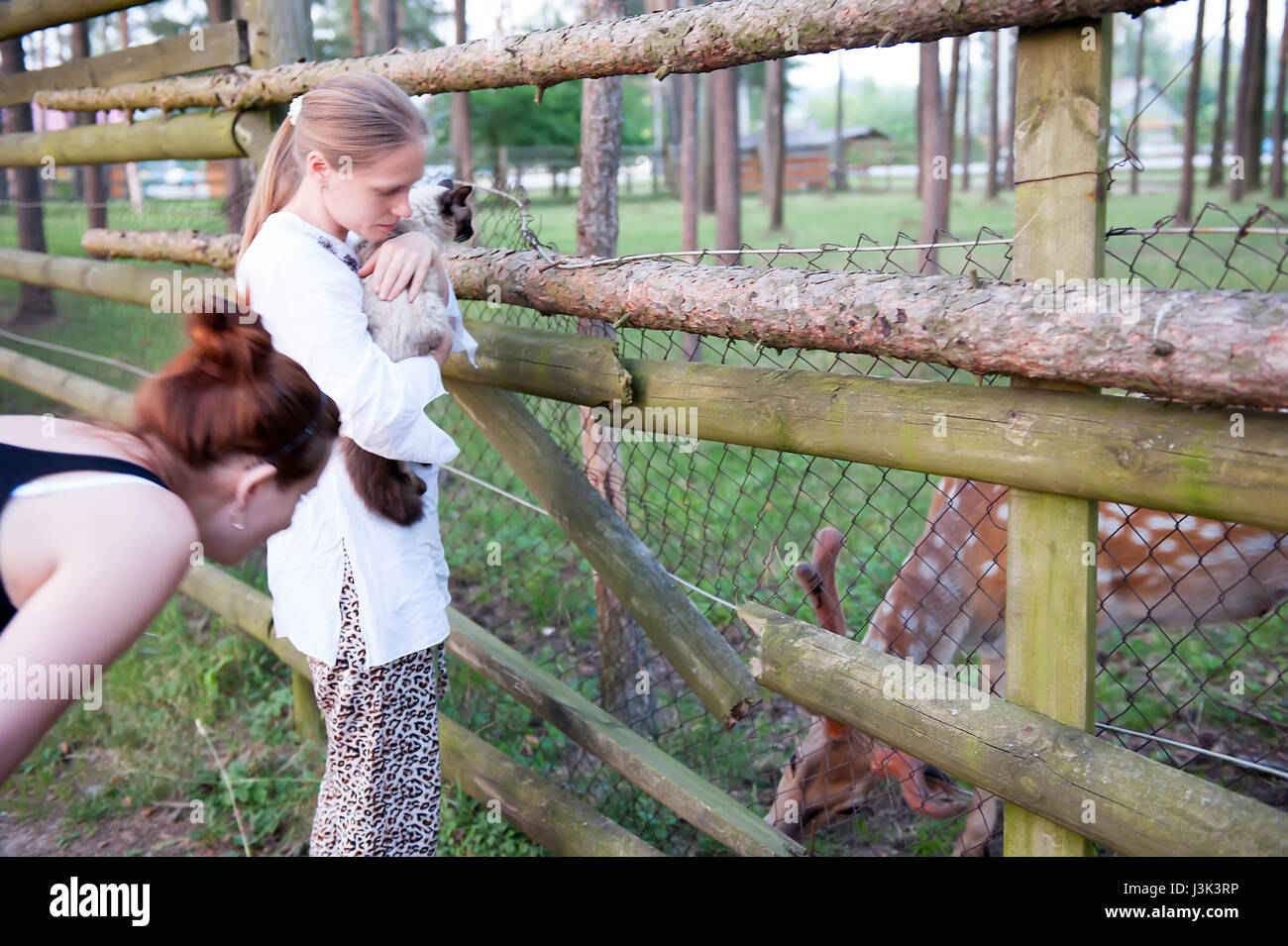 Two girls feed a deer and keep a furry cat on their hands. The concept of love for animals and pets. - Stock Image