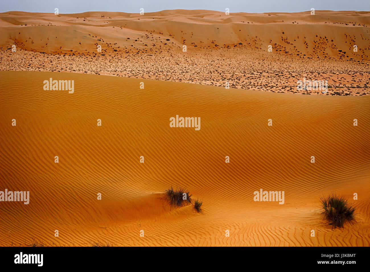 View across Wahiba Sands (Ramlat al Wahaybah) in Oman - Sharqiya Sands Stock Photo