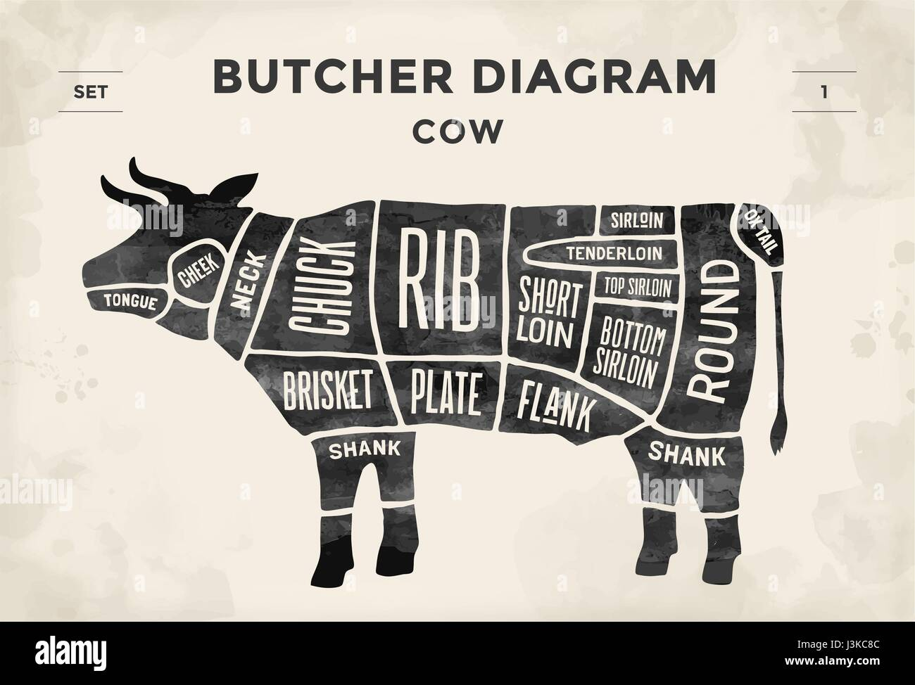 Cut of meat set. Poster Butcher diagram and scheme - Cow. Vintage typographic hand-drawn. Vector illustration. - Stock Image