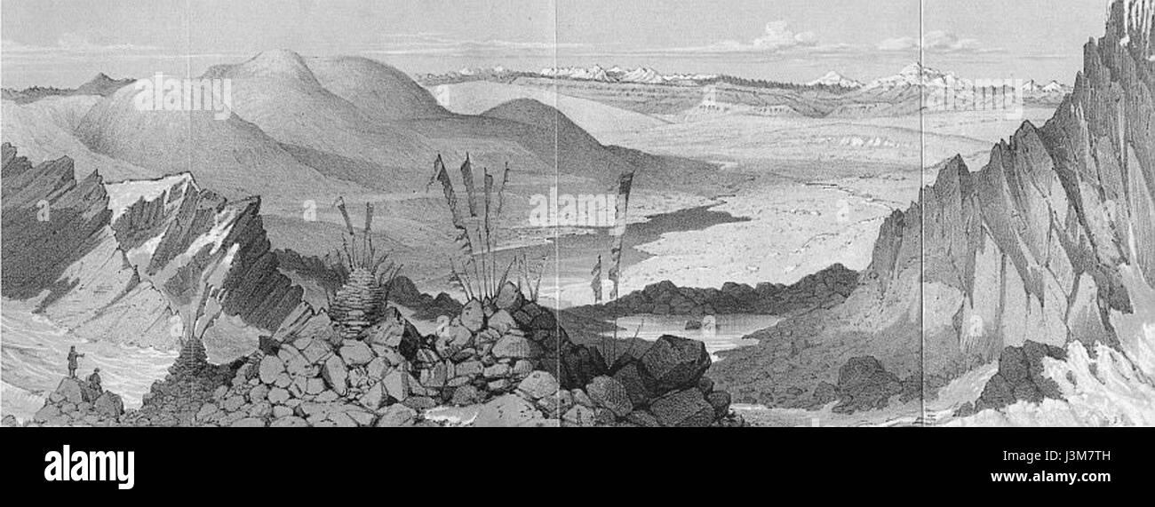 Hooker Himalayan - Stock Image