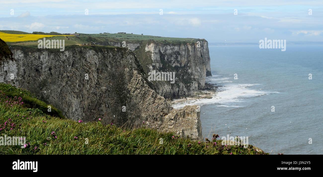 Bempton Cliffs - Stock Image