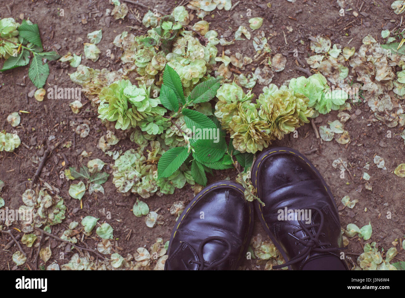 Dr. Martens shoes on top of assorted foliage on ground of Hampstead Heath, North London. - Stock Image