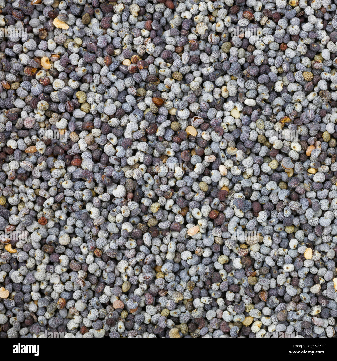 Poppy seeds background or texture. Close up photography - Stock Image