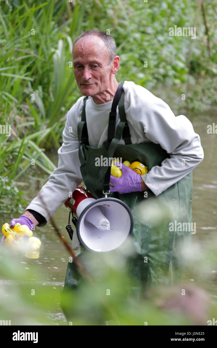 Ewell Court, Epsom, Surrey, UK. 6th May, 2017. The annual charity duck race along the Hogsmill river in Ewell Surrey. - Stock Image