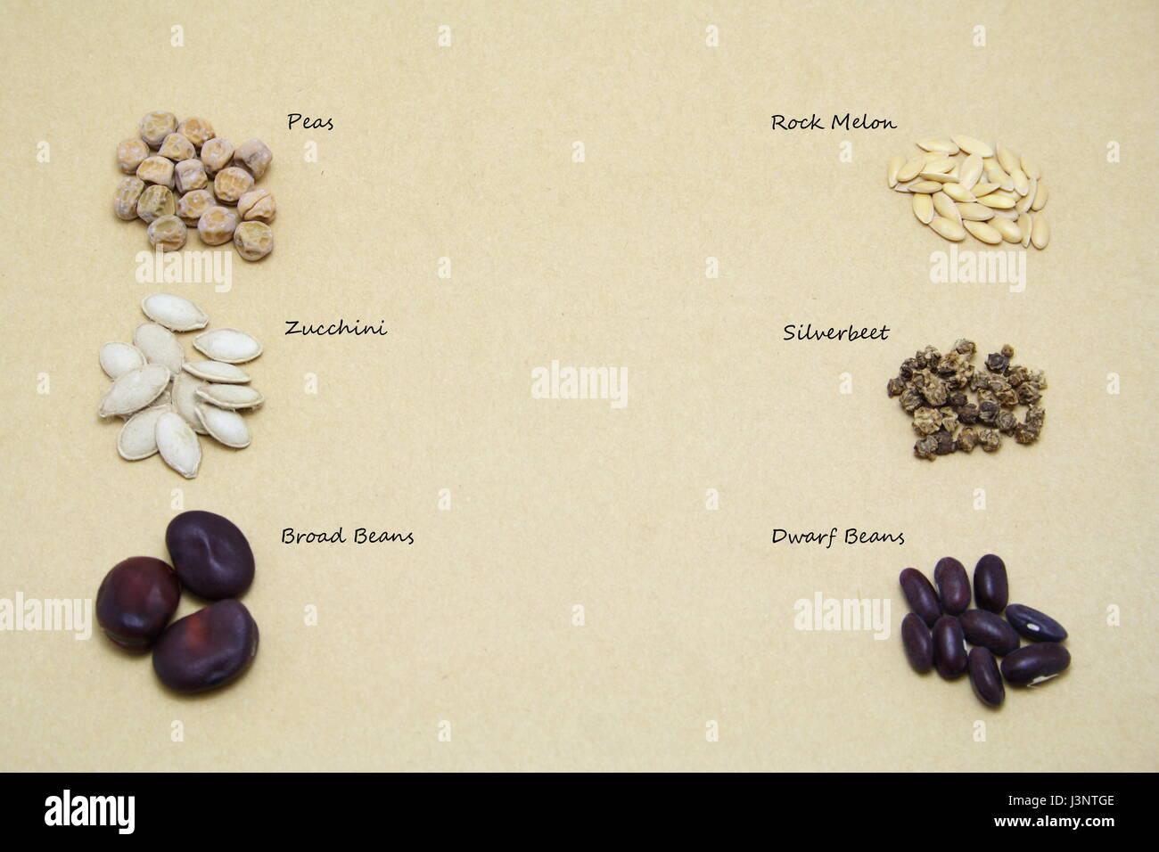 Seed Varieties - Stock Image
