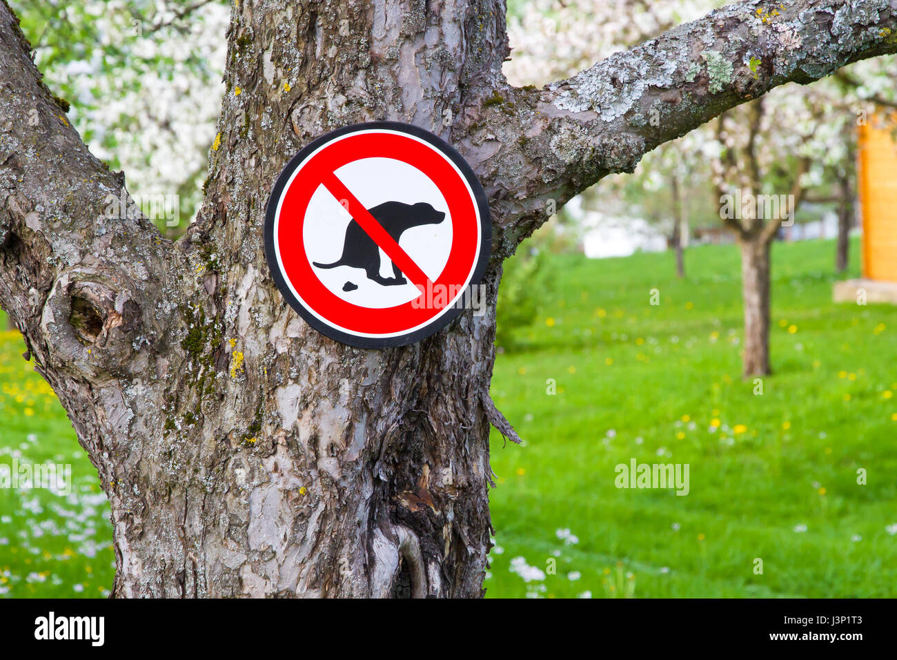 No dogs on the meadow - Stock Image
