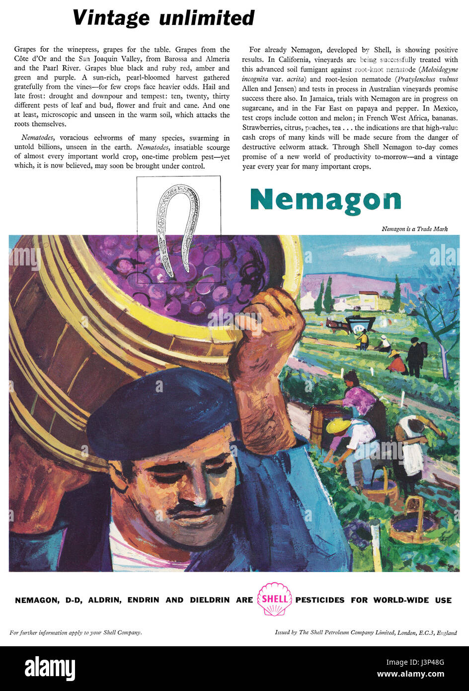 1958 British advertisement for Nemagon, a pesticide made by Shell. First synthesised in 1955 as a soil fumigant, - Stock Image