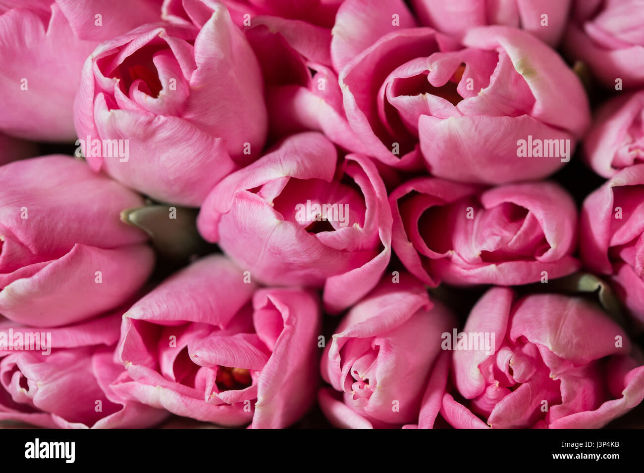 Amazing colorful spring bouquet tulips closeup background of amazing colorful spring bouquet tulips closeup background of flowers izmirmasajfo