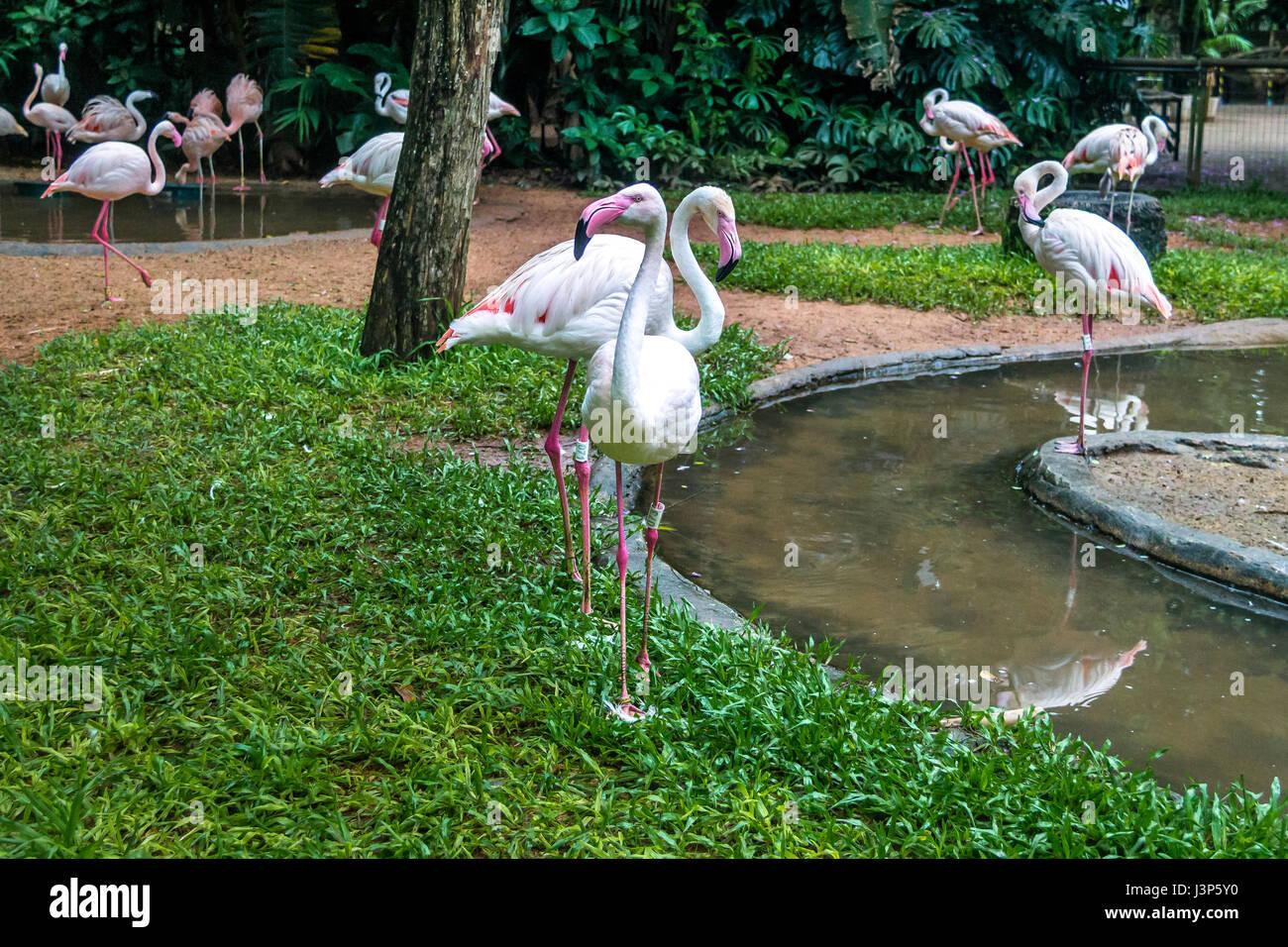 Flamingos at Parque das Aves - Foz do Iguacu, Parana, Brazil - Stock Image