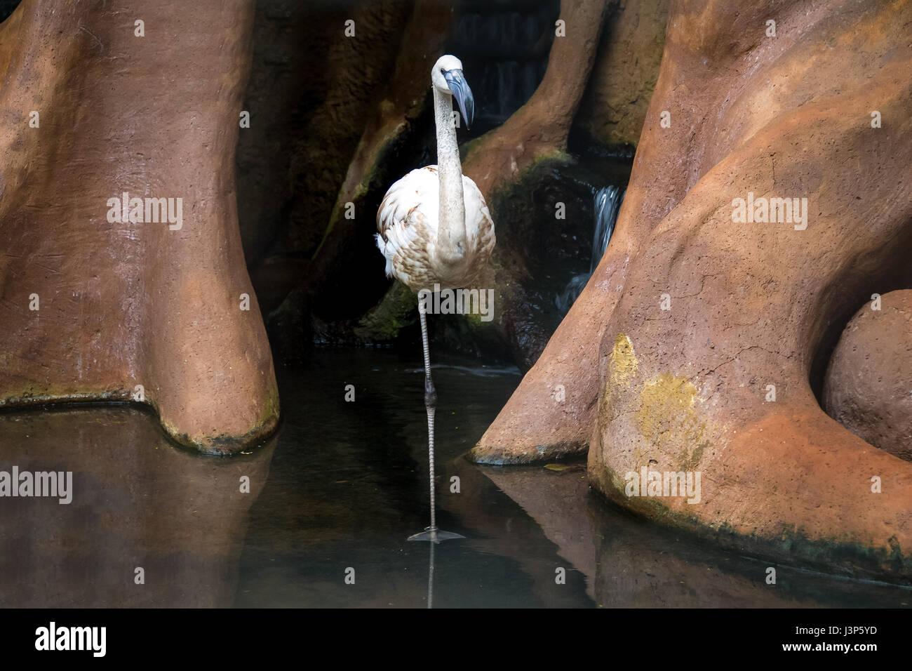 Flamingo at Parque das Aves - Foz do Iguacu, Parana, Brazil - Stock Image