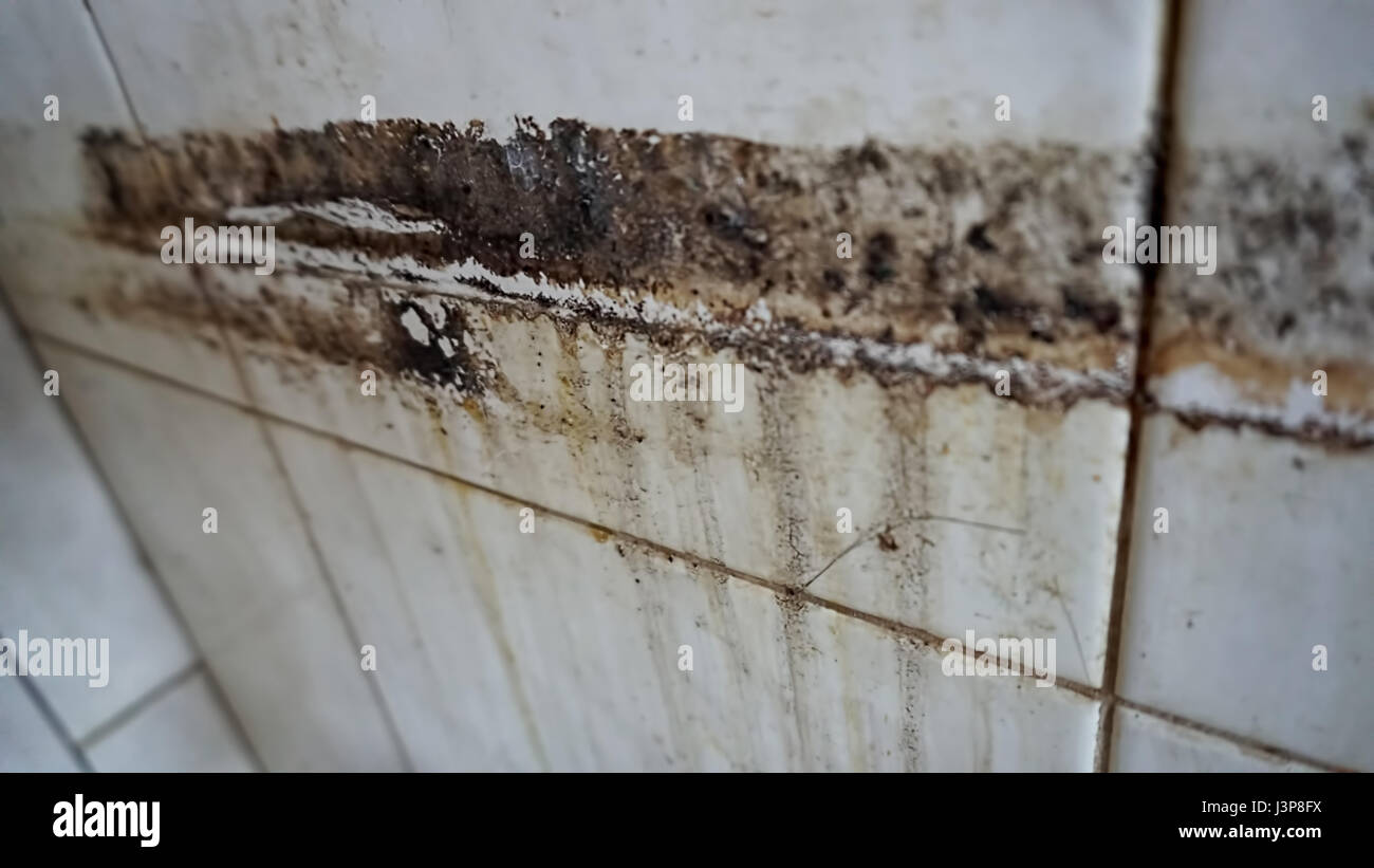 Old mud on an old tile with divorces on the wall. - Stock Image