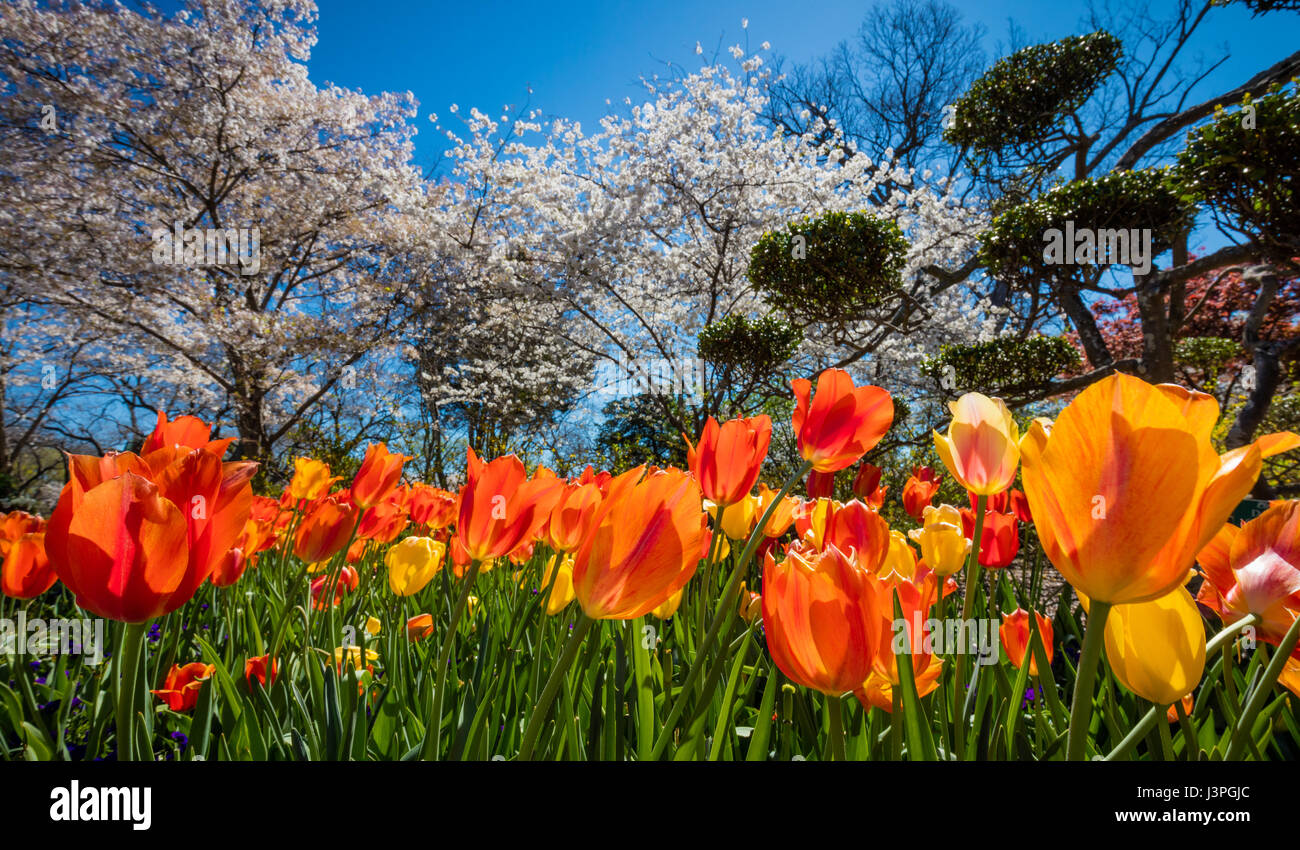 The Dallas Arboretum and Botanical Garden is a 66-acre botanical garden located at 8617 Garland Road in East Dallas, - Stock Image