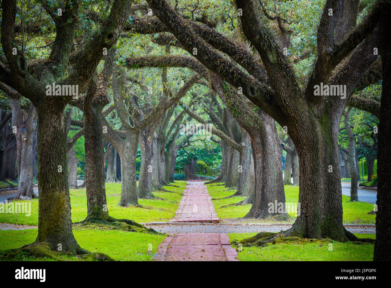 The Boulevard Oaks Historic District is one of the finest residential neighborhoods constructed during Houston's - Stock Image