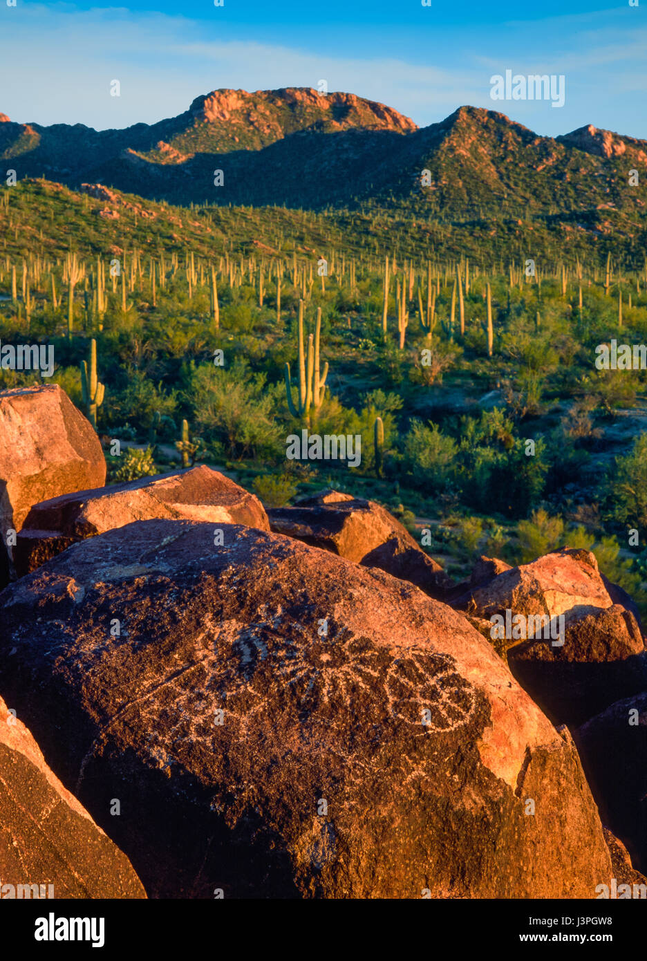 The Signal Hill Trail in Saguaro National Park takes visitors back nearly two thousand years to view a series of - Stock Image