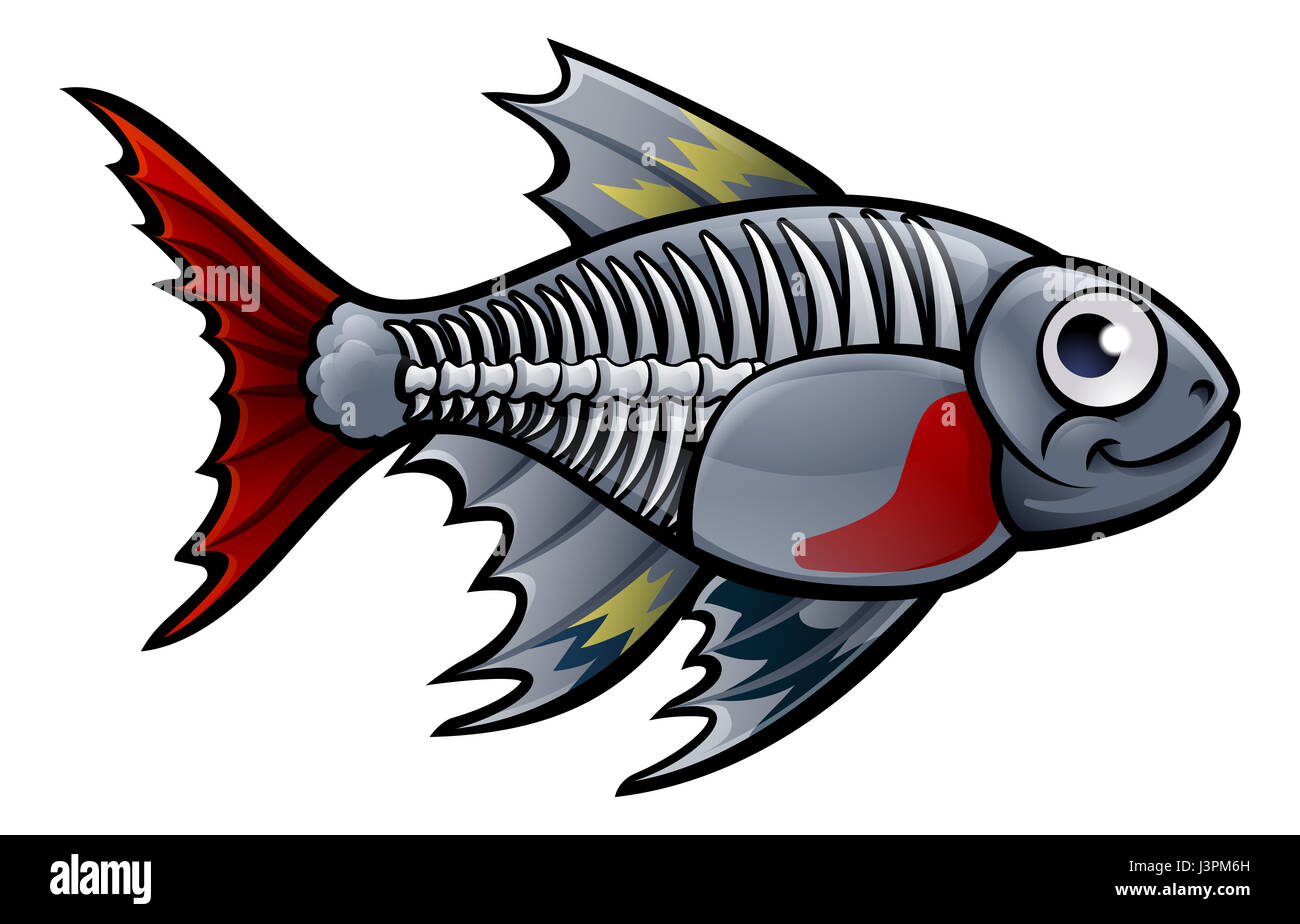 x ray fish stock photos amp x ray fish stock images alamy