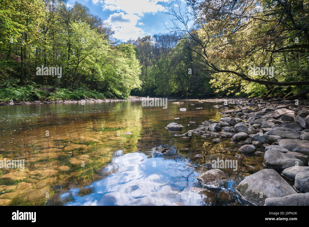 River Ure flowing through Hackfall Wood, North Yorkshire, England Stock Photo