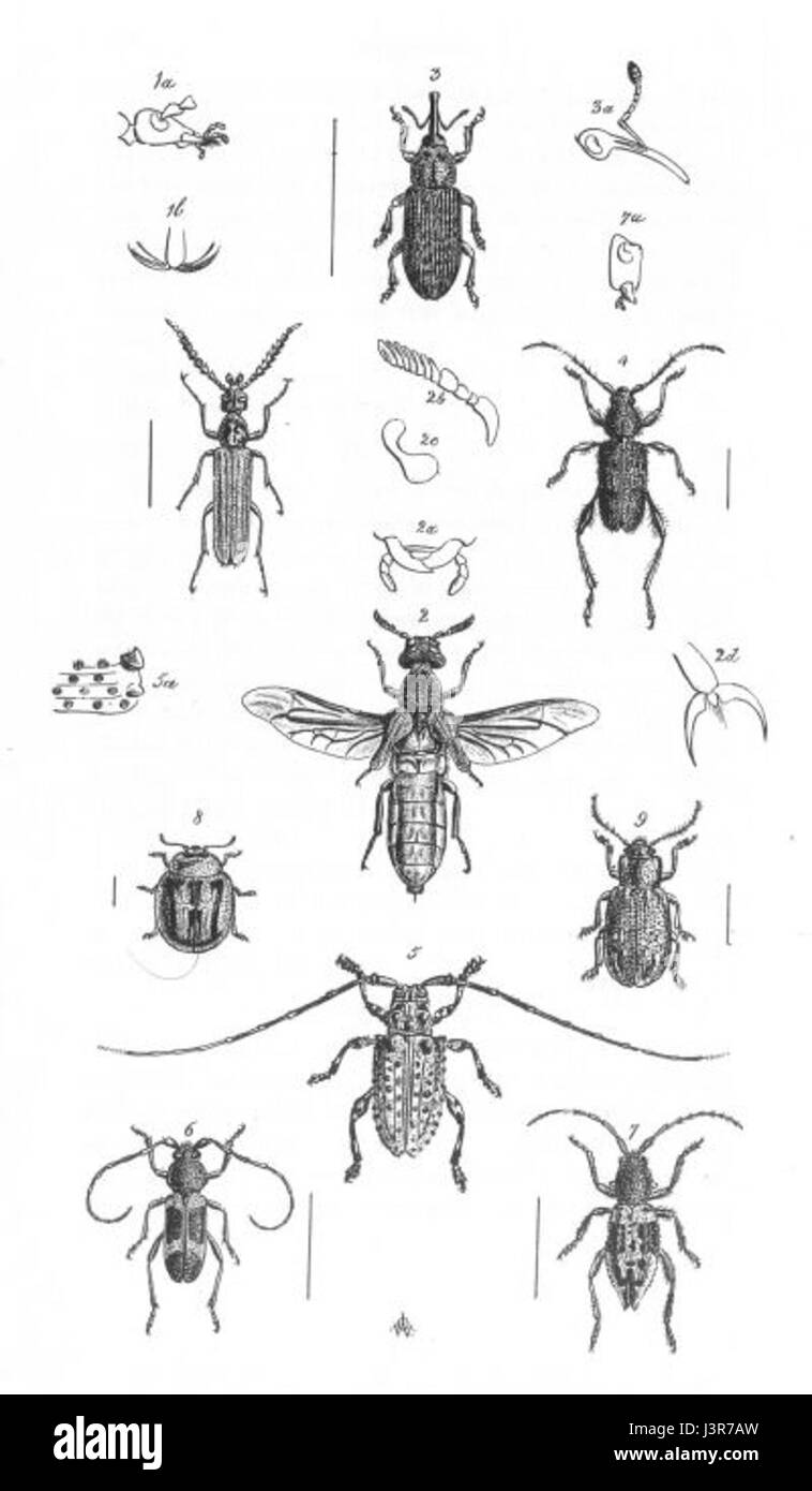 Insects Plate 2 (Discoveries in Australia) - Stock Image