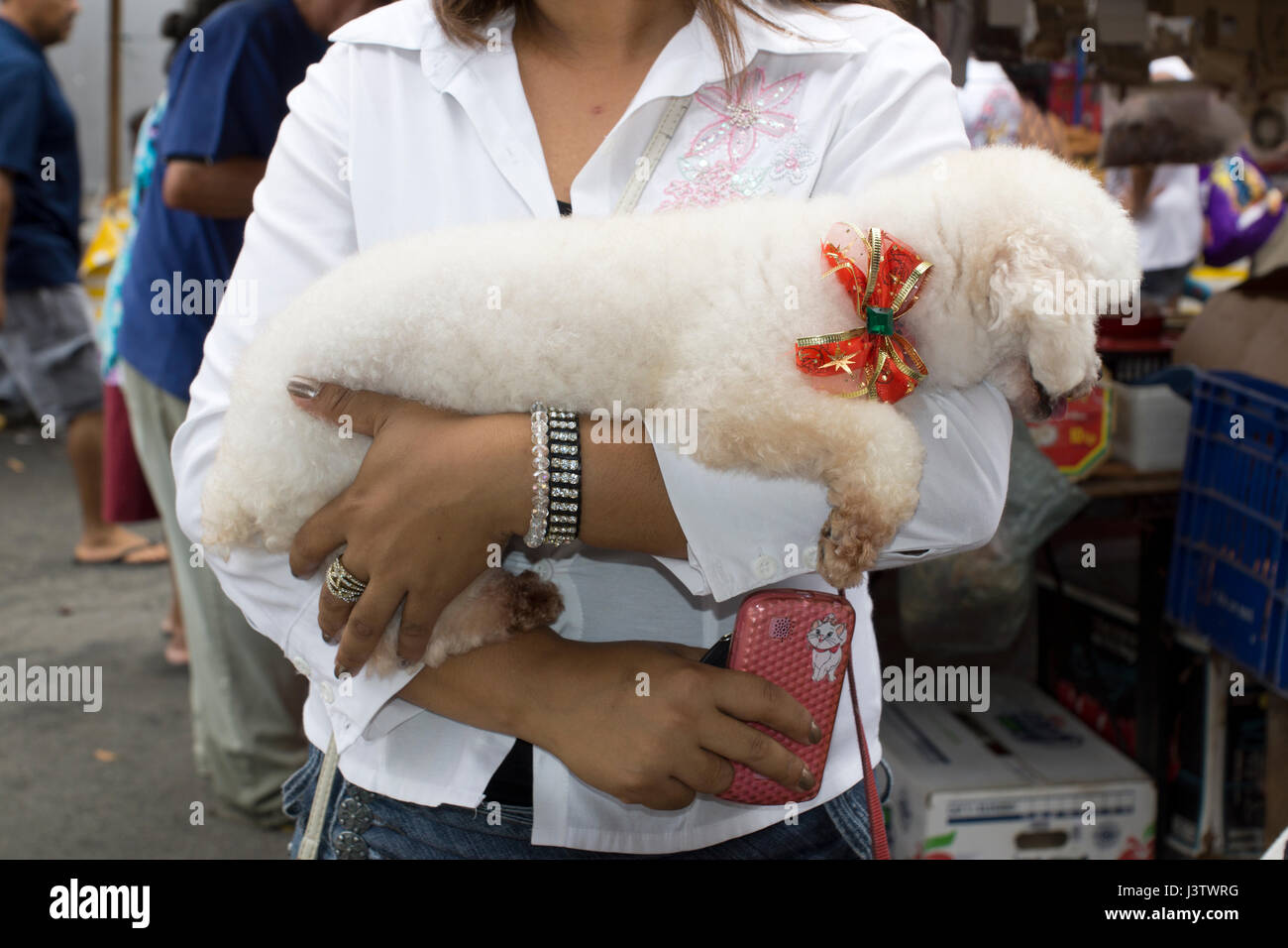 Brazil, female poodle owner  holding her white dog in her arms - Stock Image