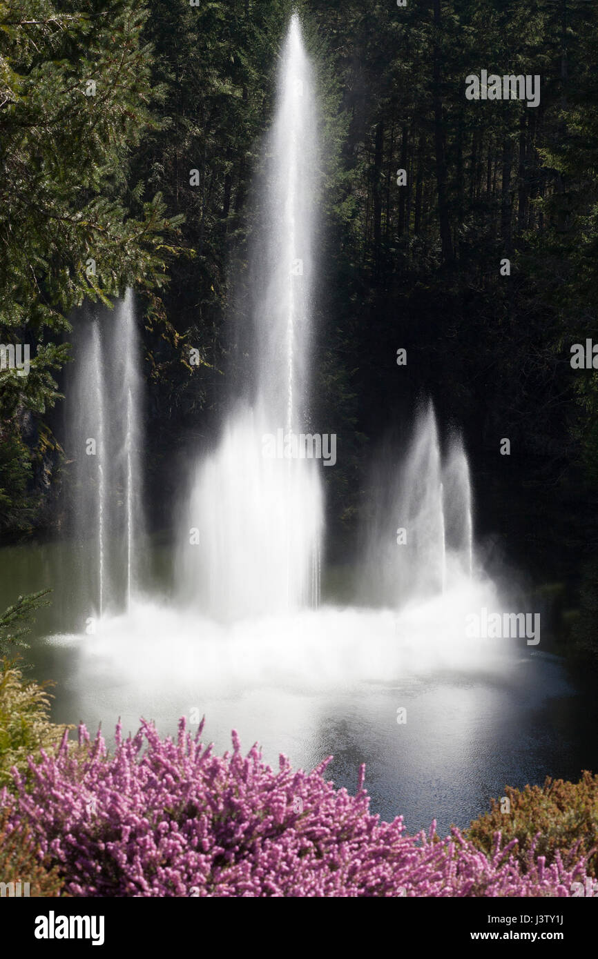 Water fountain in Butchart Gardens - Stock Image