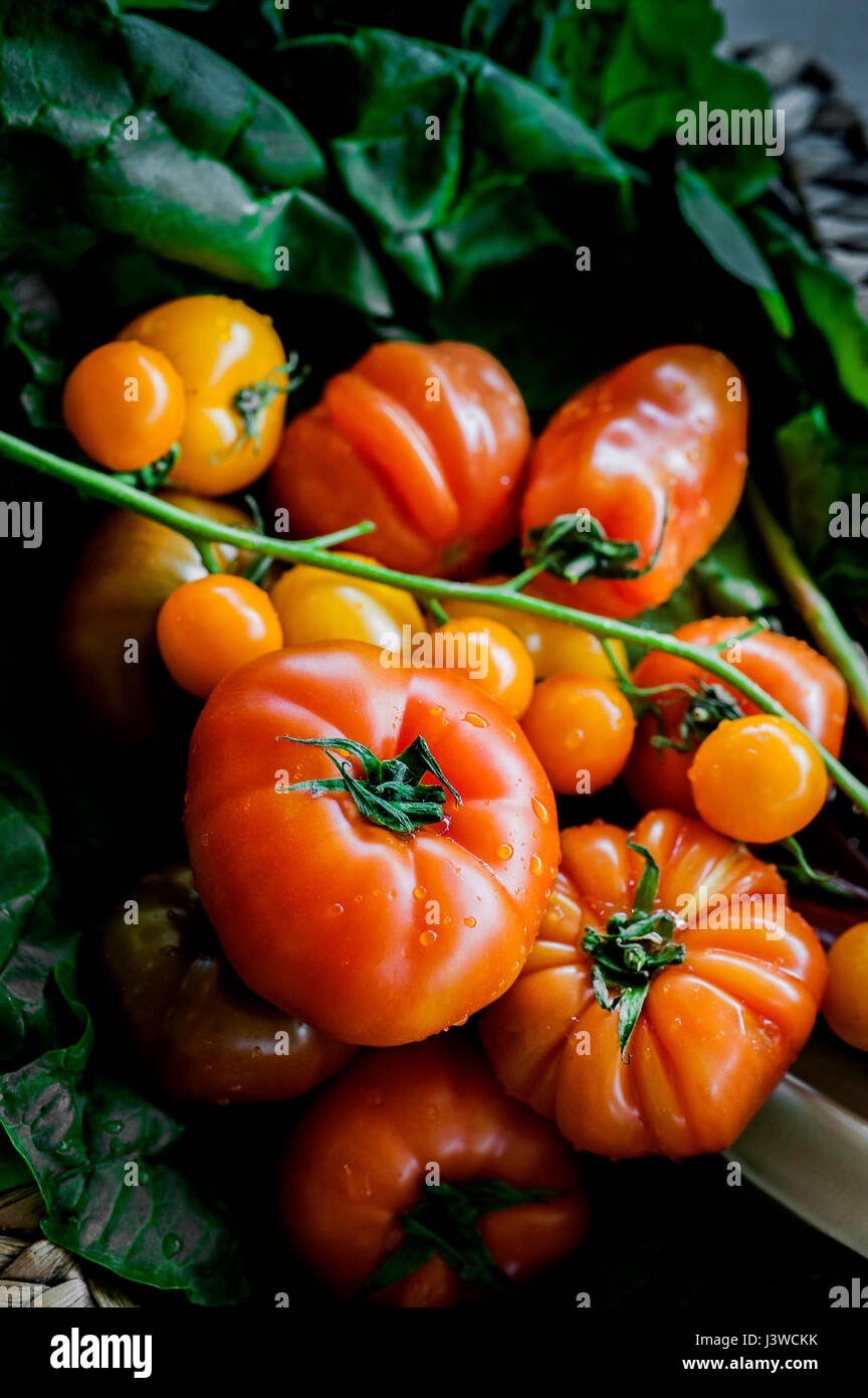 A closeup view of various types of tomatoes Fruit Food Ingredient Natural food - Stock Image