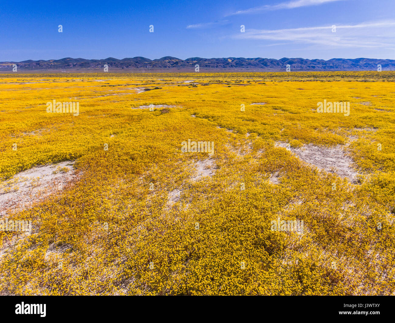aerial of Soda Lake and goldfields in bloom, Carrizo Plains National Monument, California - Stock Image