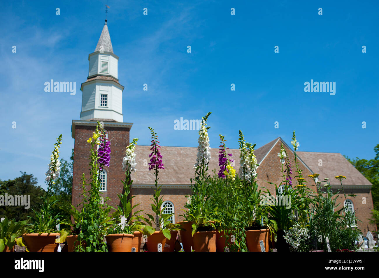 USA Virginia VA Colonial Williamsburg Bruton Parish Episcopal Church on Duke of Gloucester Street with foxgloves - Stock Image