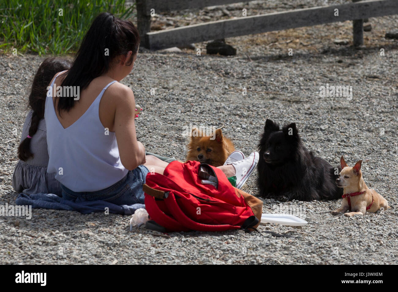 Cumbria UK 7th May  2017  Lake Windermere  Cumbria   Bowness on Windermere Sunny day Dogs also enjoy the weather     © Gordon Shoosmith/Alamy Live News Stock Photo