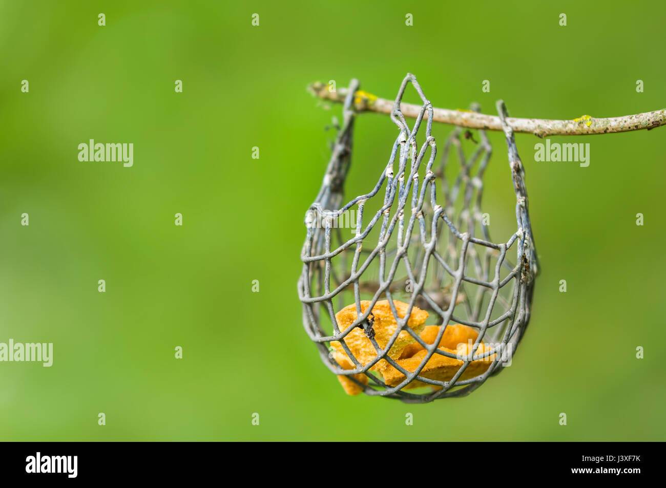 Small bird feeder hanging from a twig on a tree. - Stock Image