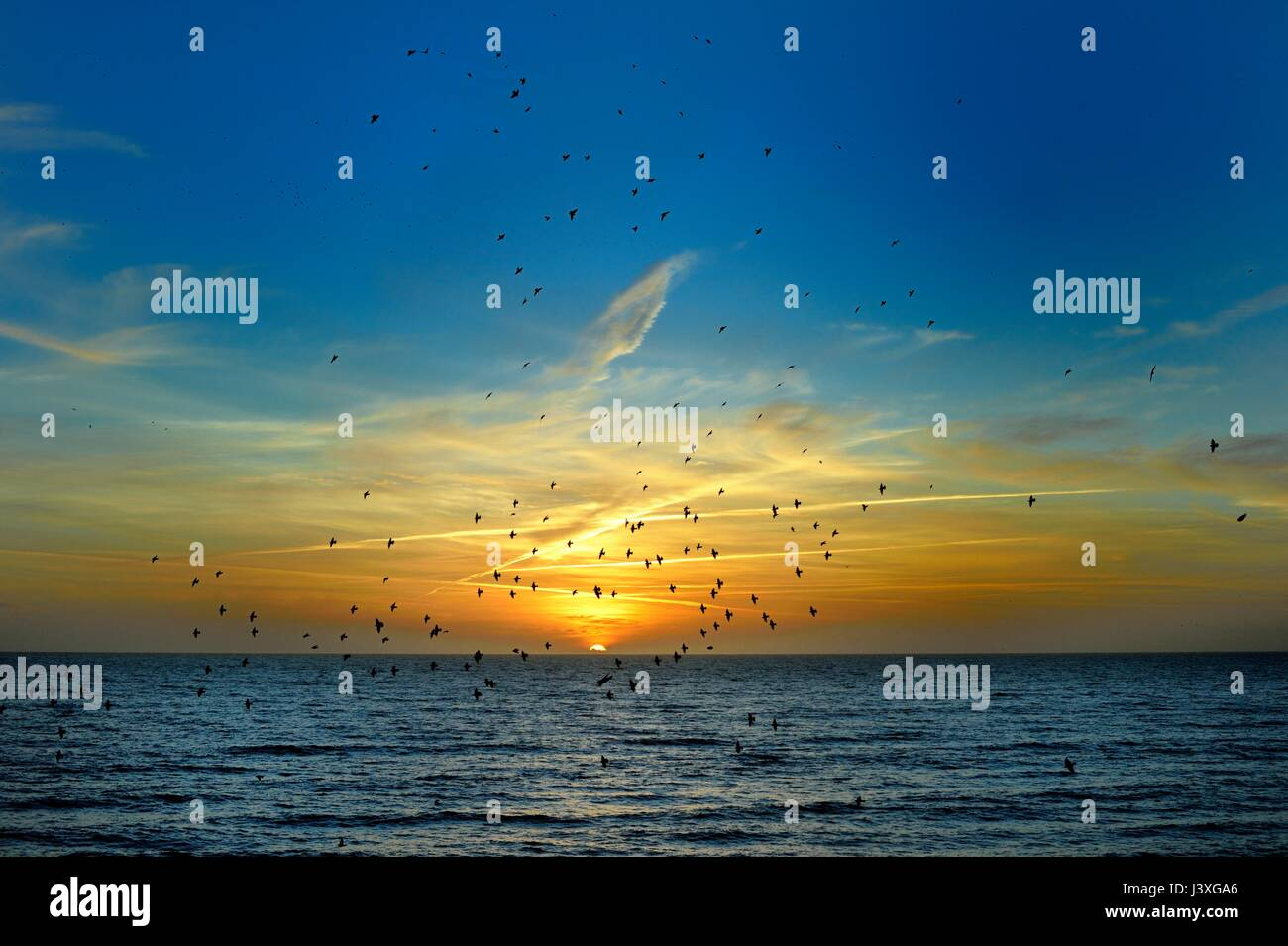 Starlings fly a murmuration over the sea at sunset - Stock Image