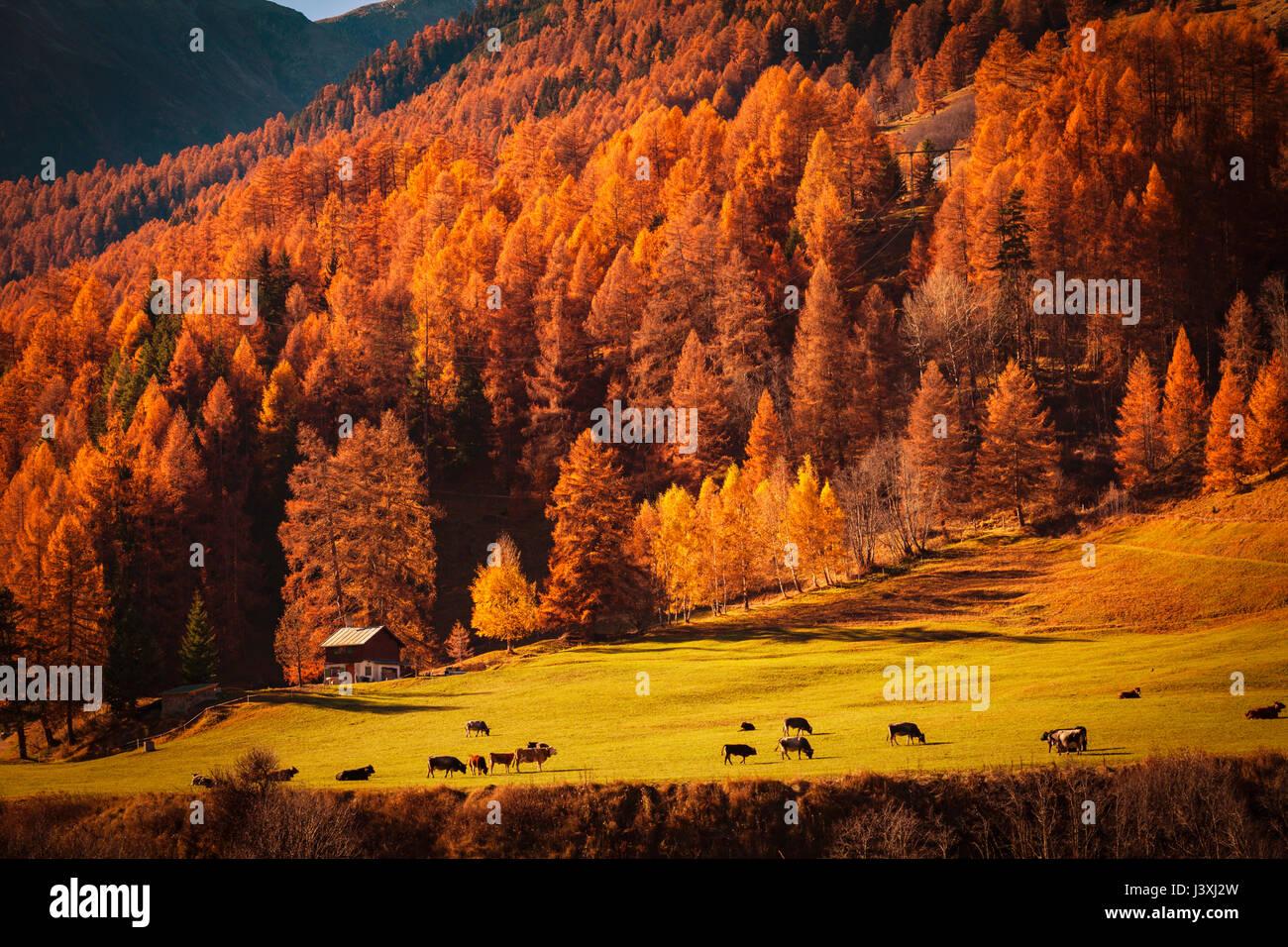 Scenic view, Engadin, Saint Moritz, Switzerland - Stock Image
