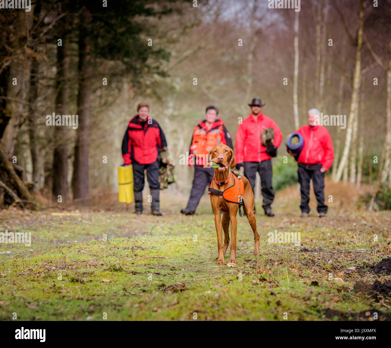 The team of volunteers the are the Lowland Search and Rescue Dogs in action in West Sussex. - Stock Image