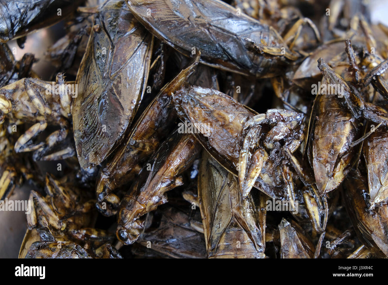 Water scorpion snacks for sale at a street side stall - Stock Image