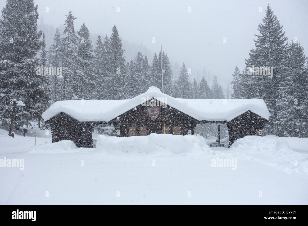 Heavy snowfall an the northeast entrance of Yellowstone National Park near Silver Gate and Cooke City, Montana, - Stock Image