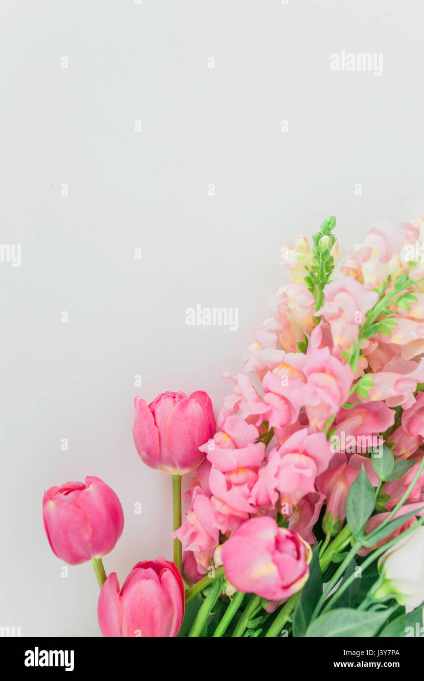 Tulips and Snap Dragon - Stock Image
